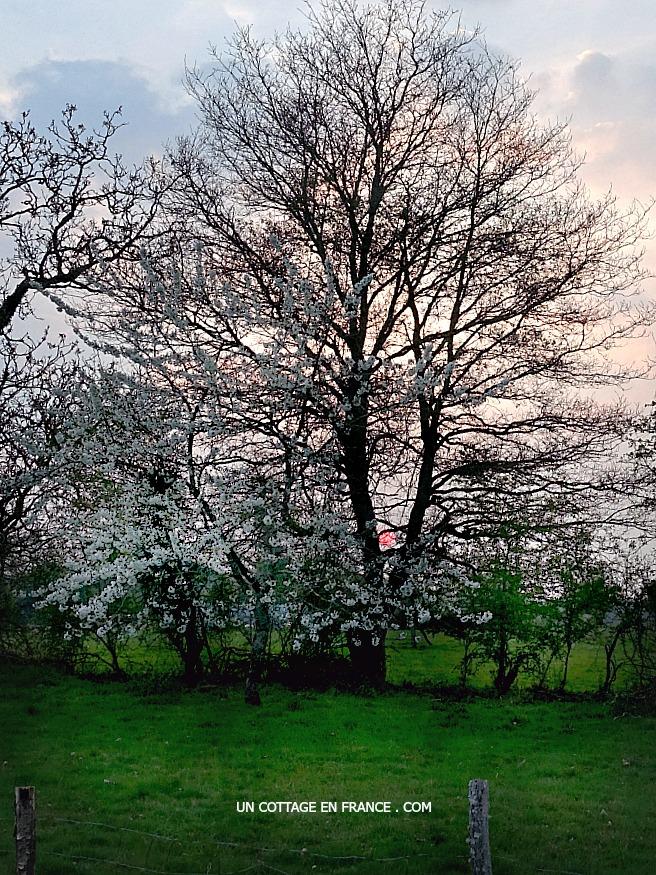 Coucher de soleil début du printemps