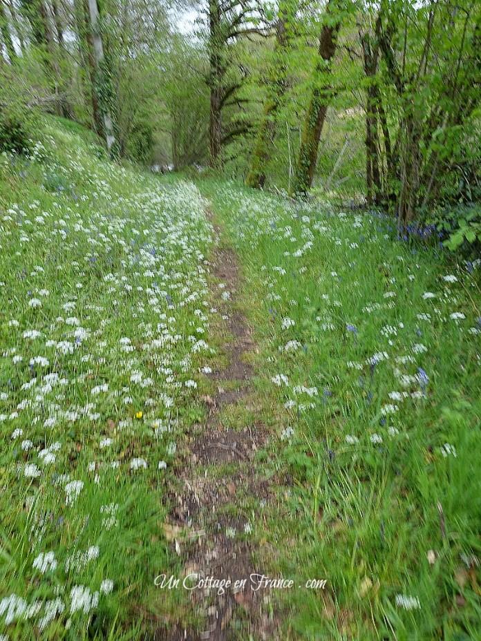 Le chemin de la Gartempe en mai (The path net to the Gartemper river in May)
