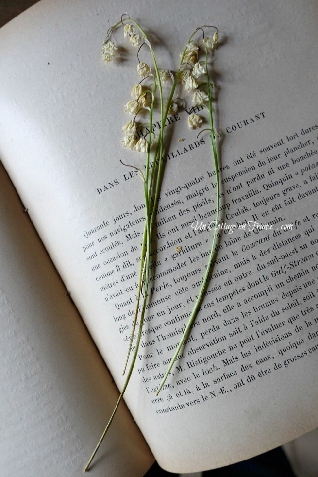 Muguets trouvés dans le livre (Lily of the valley bits found in book)