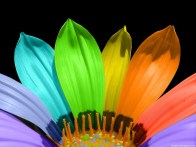 Colourful-Flower-Wallpaper