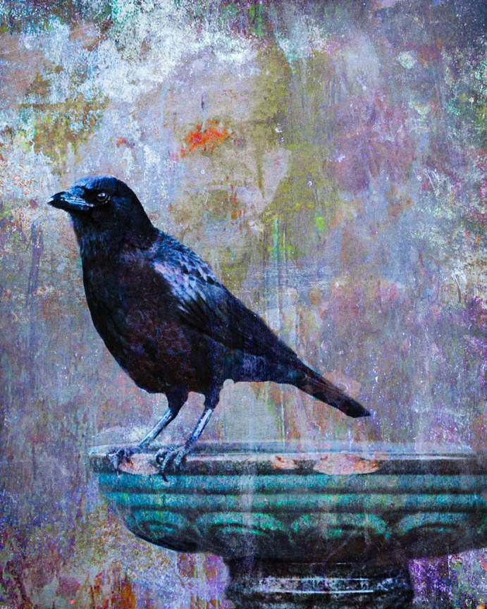 Crow On Bird Bath Painting