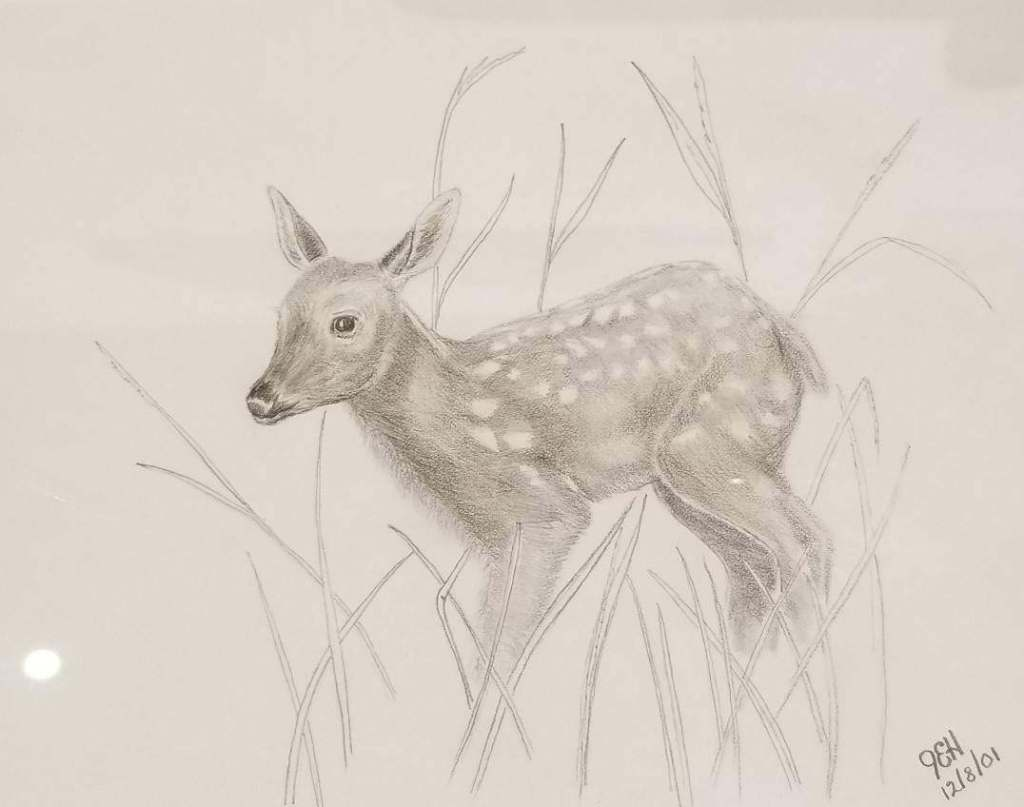 "Pencil sketch of a ""sweet fawn"" in grass, dated 12/8/01"