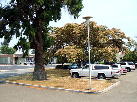 Parking lot to be replaced