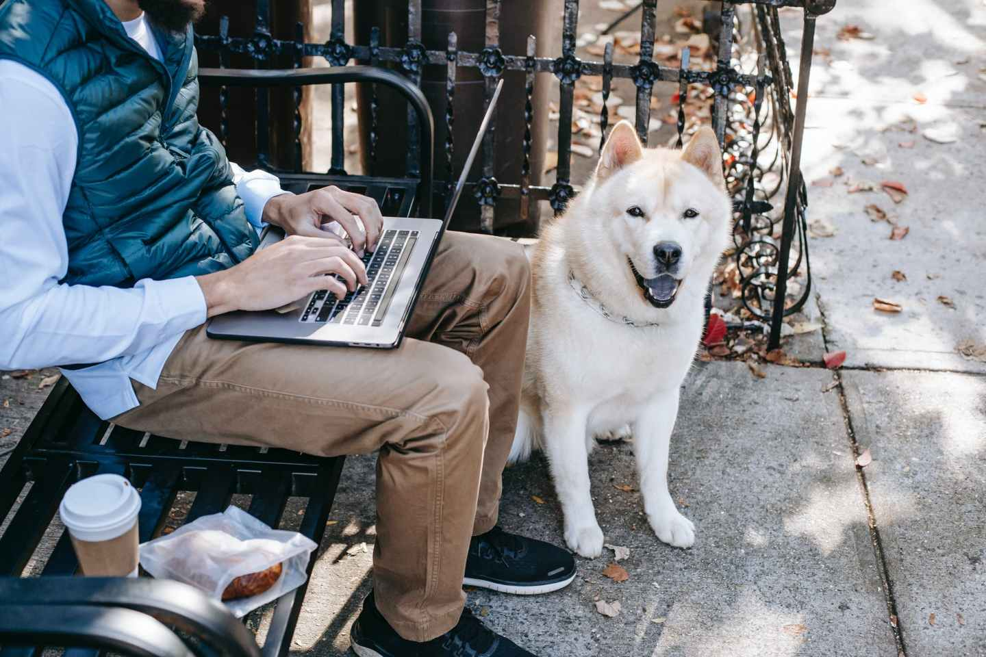 akita inu sitting near man freelancer on street
