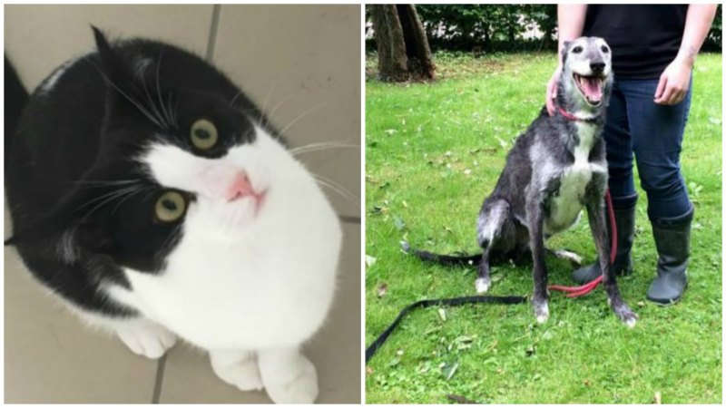 We are pleased to announce JD (right) and Gem (right) have found loving homes