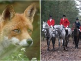Lincolnshire Talks: Should we bring back fox hunting?