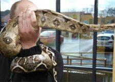 Missing 8ft snake found outside owner's home
