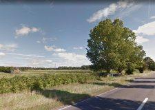 Farm's woodland housing development approved