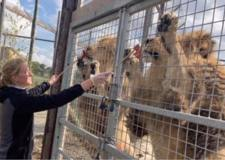 Opening restrictions lifted after Wolds Wildlife Park obtains zoo licence