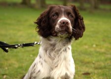 First police dog trained to sniff out cybercrime in Lincolnshire