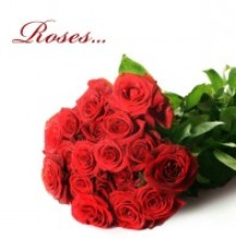 bright_roses_01_hd_picture_167011.jpg