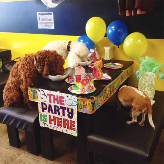 Review: Dog Birthday Party At The Doggy Style Deli