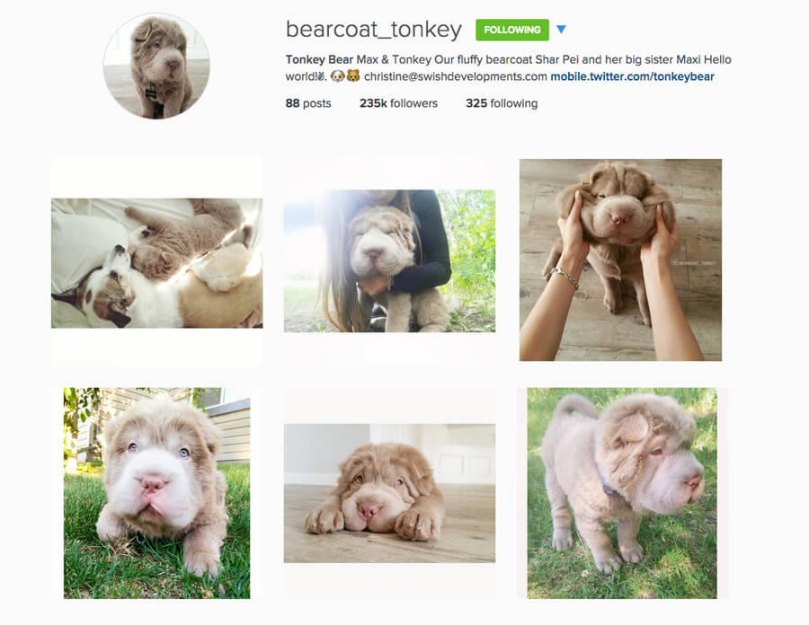 Edmonton Instagram Users - bearcoat_tonkey