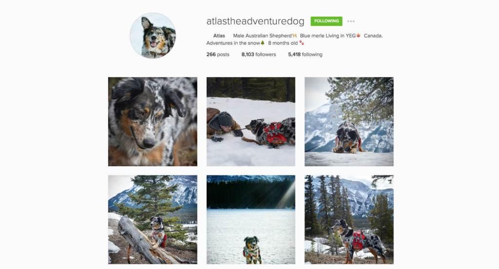 Top Edmonton Instagram Users - Atlastheadventuredog - Social Media