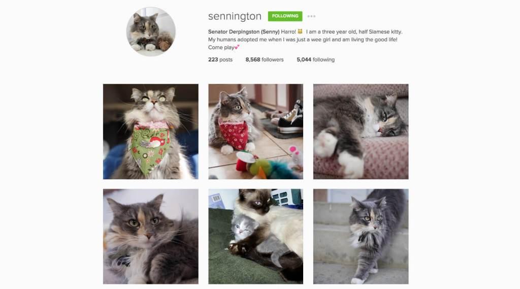 Top Edmonton Instagram Users - sennington - Social Media