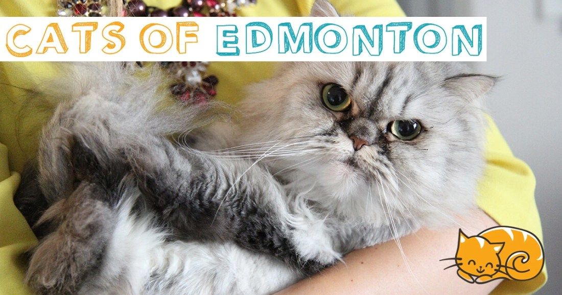 Cats of Edmonton