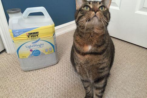 Thor Litter Purina Tidy Cat