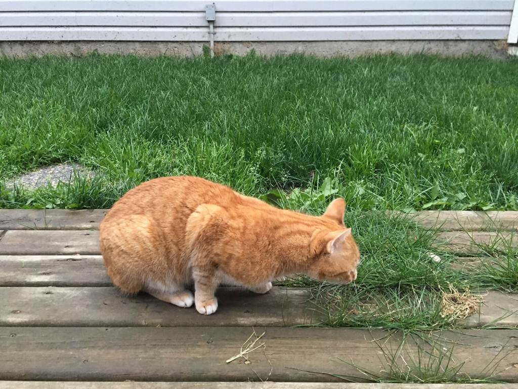 Loki Grass