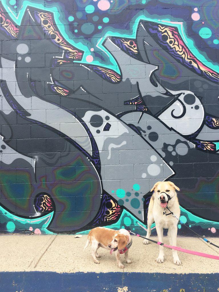 Instagrammable Wall - Pets Edmonton