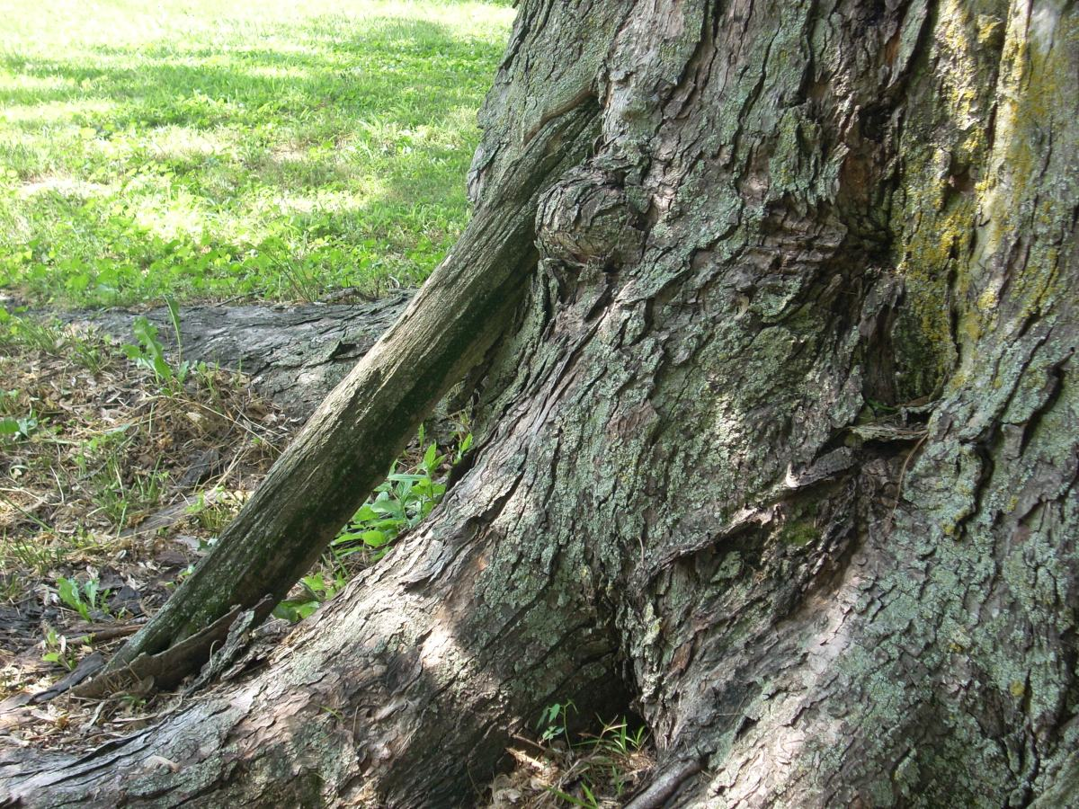 tree trunk with wooden post embedded within