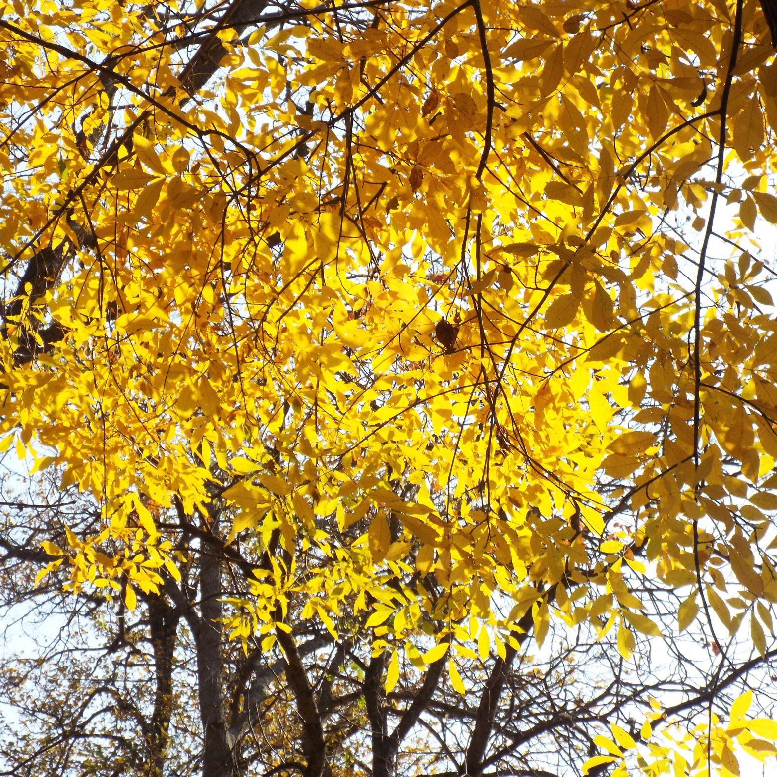 photo of golden fall foliage