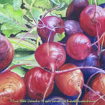"Still Life paintings by Linda Abblett: Still lIfe with a bunch of fresh beets in watercolor by Linda Abblett. 15"" x 11"" Original - $700"