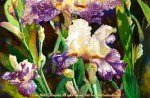 """Linda Abblett : Florals : Summer's Bloom, Watercolor painting of purple and white iris flowers in bloom by Linda Abblett. Original 22"""" x 15"""" $900; giclee 22"""" x 14.5"""" $130"""