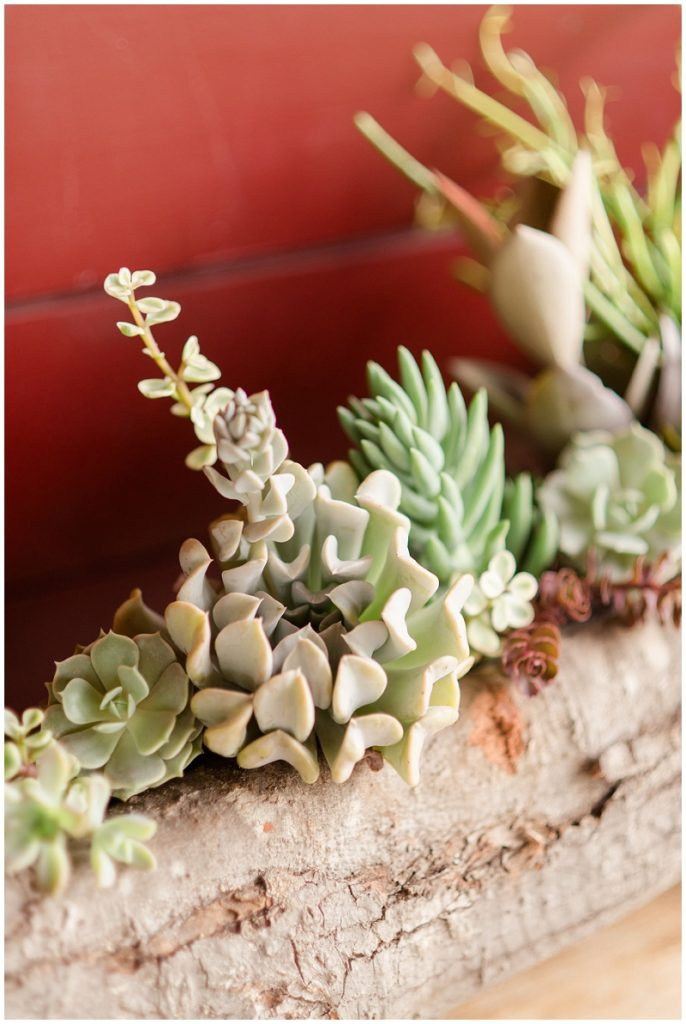 A row of succulents as wedding decorations at the Barn at Gibbet Hill. Photos by Linda Barry Photography, a Boston based wedding photographer.