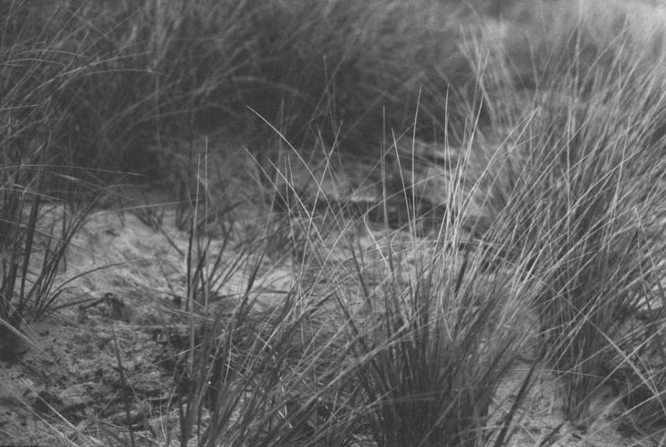 dune grass on my first roll of film