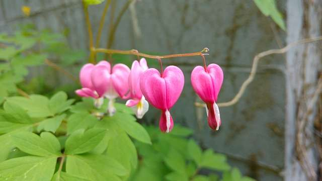 Pink Heart Flowers - It's all about love, Linda Bishopp, Therapist in Ashford