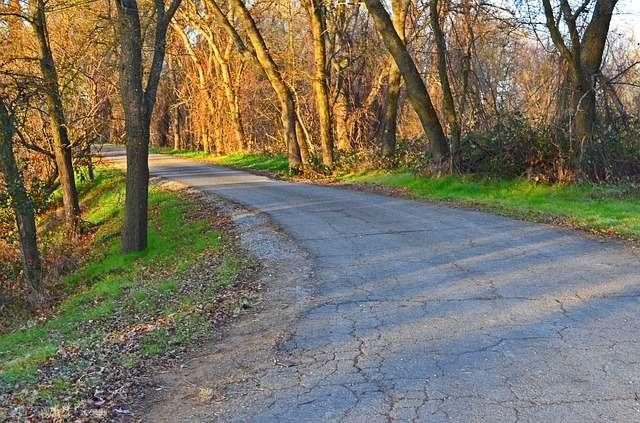 Road with trees, My Journey, Linda Bishopp, Kent Therapist