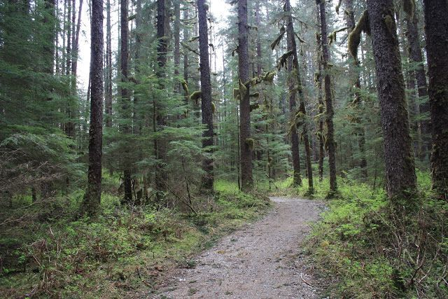 herbert-glacier-trail