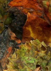 """Leaves After Delacroix,"" woodland banner by Steven Durland"