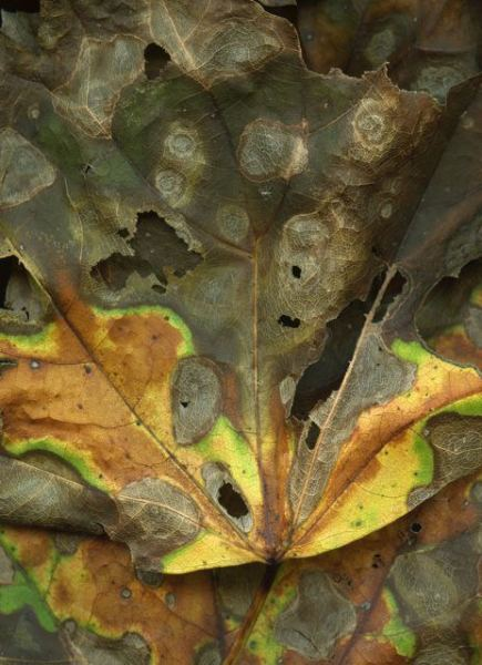 """Leaves after Van Gogh,"" woodland banner by Steven Durland"