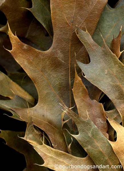 """""""Leaves after Orozco,"""" woodland banner by Steven Durland"""