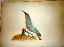 Therese M Cairnes Watercolour Album early 19th Cent before her marriage