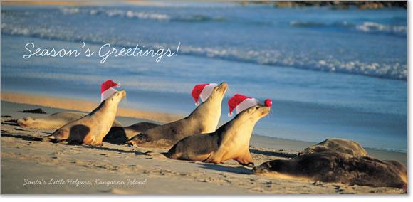 Australian Christmas Cards Christmas Lights Card And Decore