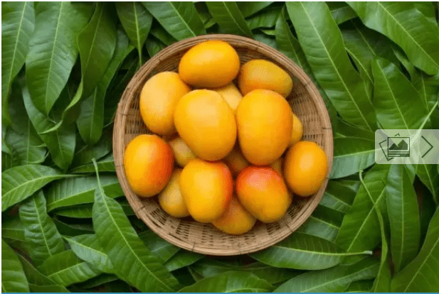 Mango for Constipation: The Benefits and How to Prepare It