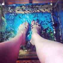 fish massage! they eat the hard/dead skin off your feet!