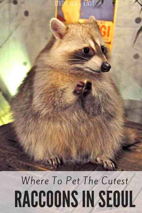 Raccoon Cafe Seoul