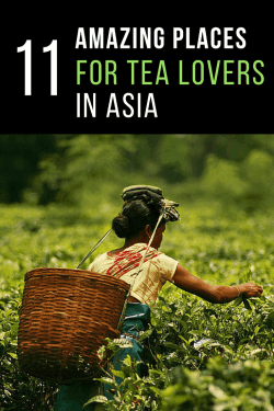 Must-Visit Locations for Tea Lovers in Asia