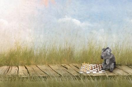 koala chess web