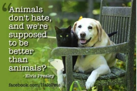 Animals don't hate...by Elvis