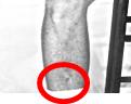 Elvis in Kid Galahad scar on right leg circled
