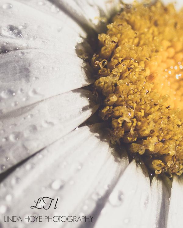 2015-06-28 Daisy Day-1-8