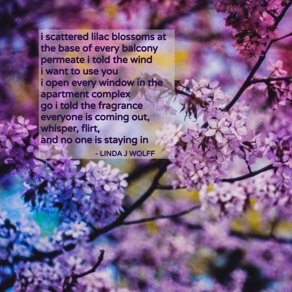 diffuse. poem by linda j wolff (1) - blog header media