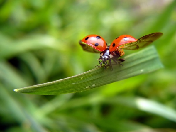 ladybugs, children, and understanding death