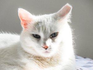 little white feral cat