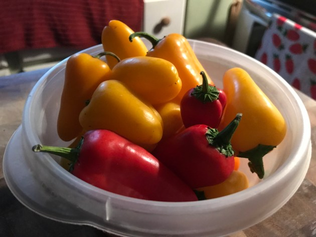 Mini Sweet Bell Peppers.jpg