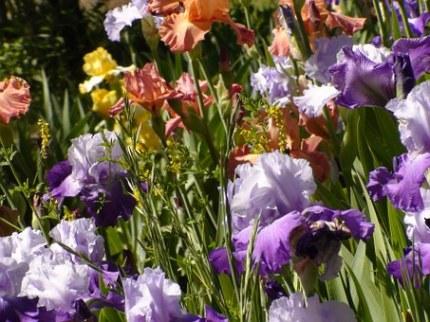 mixed irisis
